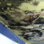 Mold Damage Remediation