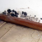 Mold Damage Cleanup